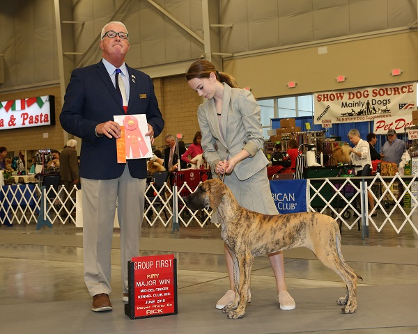 Doria winning a 4-6 month puppy group 1 under Steve Keating with Cecily!!