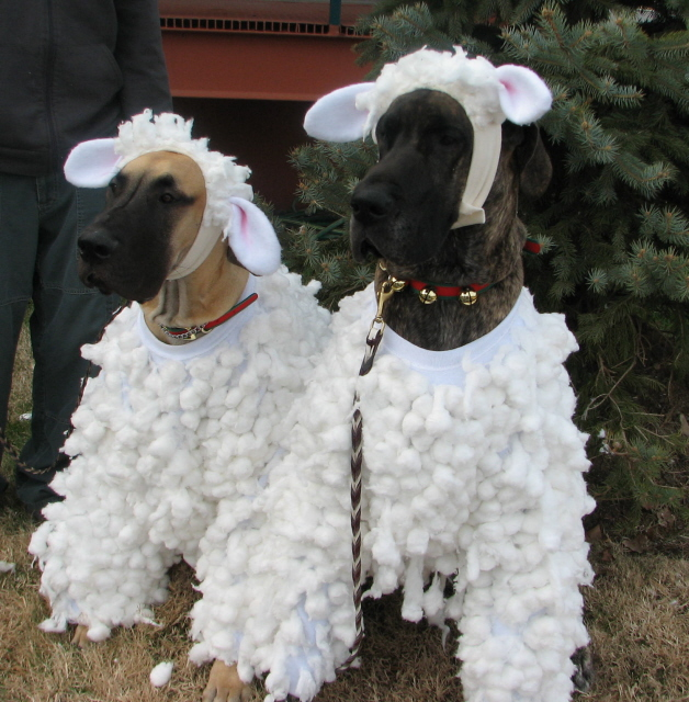 Glory and Doc dressed as sheep.