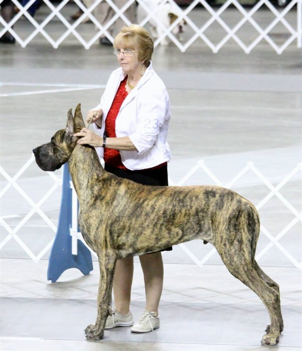 Gunnie at 9 months old in the ring.