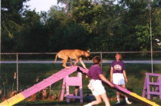 Agility A-frame at 5 mos old